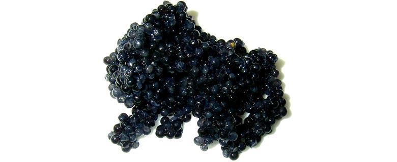 caviar-one