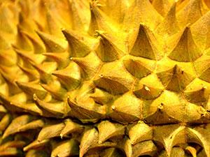 durianfruit