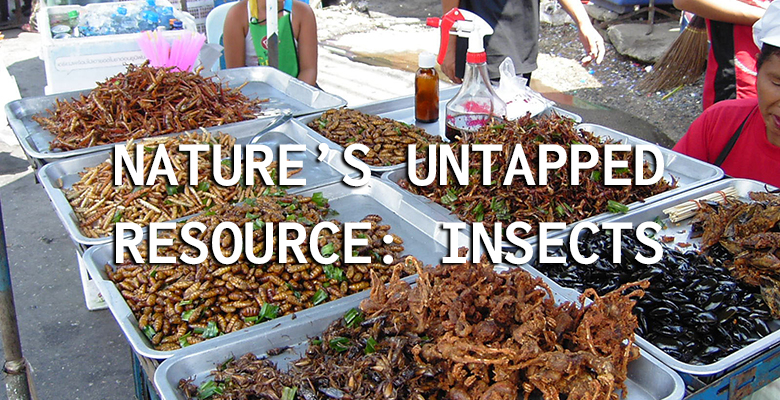 nature's untapped resource - insects